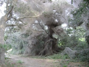 giant cobweb